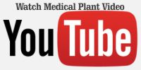 medical youtube