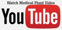 medical youtube